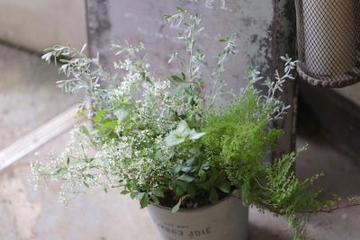 ふんわりと小さな、小さな葉や花の寄せ植え