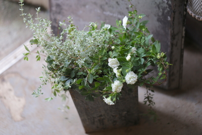 ペチュニアと爽やかなグリーンの寄せ植え