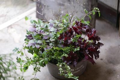 シックな葉物の寄せ植え<ブリキ>