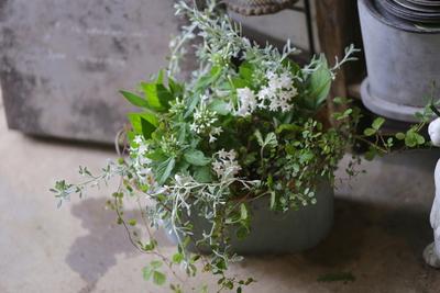 白とグリーンの爽やかな寄せ植え<ブリキオーバル>