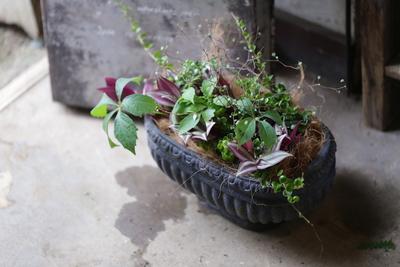 シックな葉物の寄せ植え<ブラックオーバルポット>