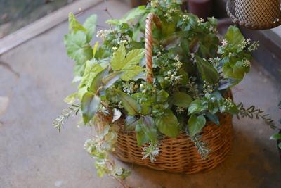 ジュズサンゴバニラのグリーンな寄せ植え<バスケット>