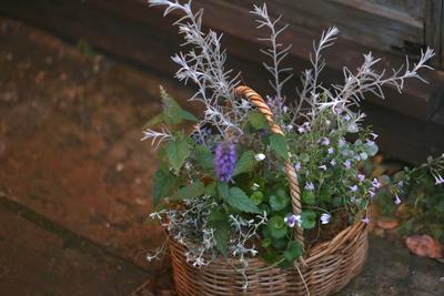 柔らかな紫の寄せ植え