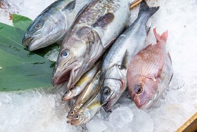 産地仲卸自慢の天然鮮魚セット