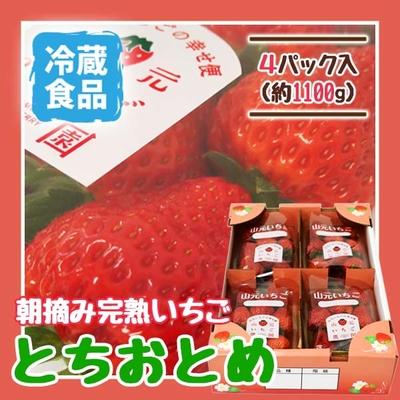 朝摘み完熟いちご とちおとめ 4パック