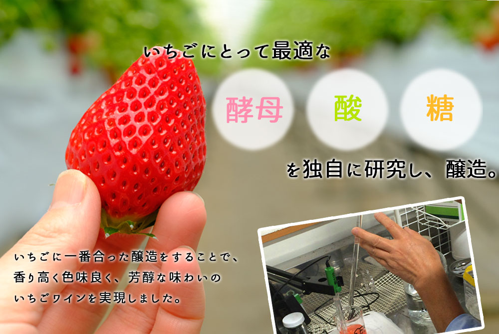 いちごにとって最適な酵母、酸、糖を独自に研究