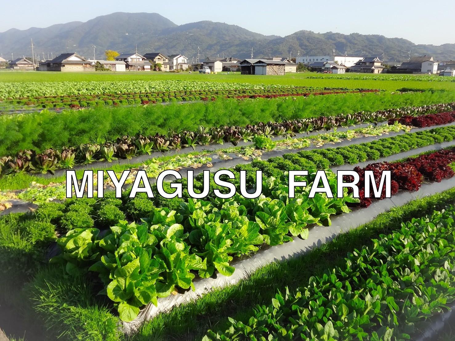 秋冬野菜の農園