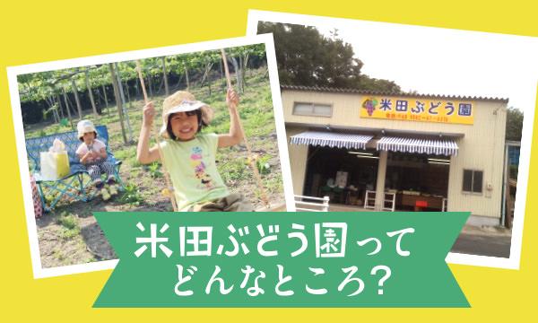 米田ぶどう園ってどんなところ