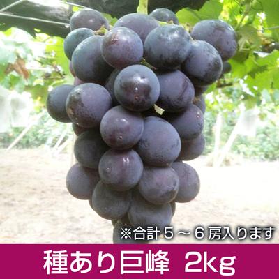 種あり巨峰2kg