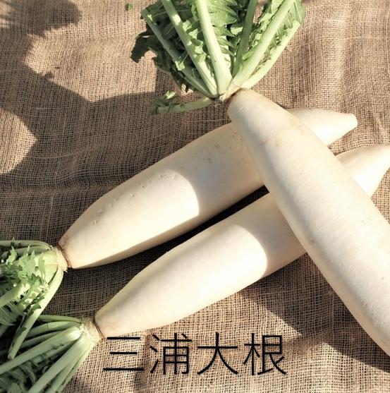 だいこん食べ比べセット(三浦大根1本入)