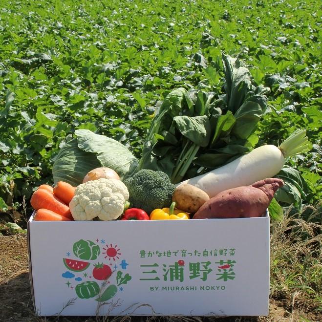 三浦野菜 詰合せセット(大)