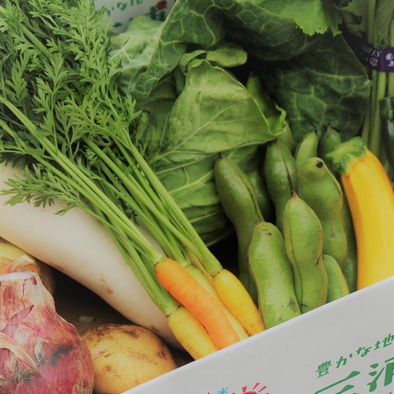 三浦の夏野菜 詰合せセット(小)