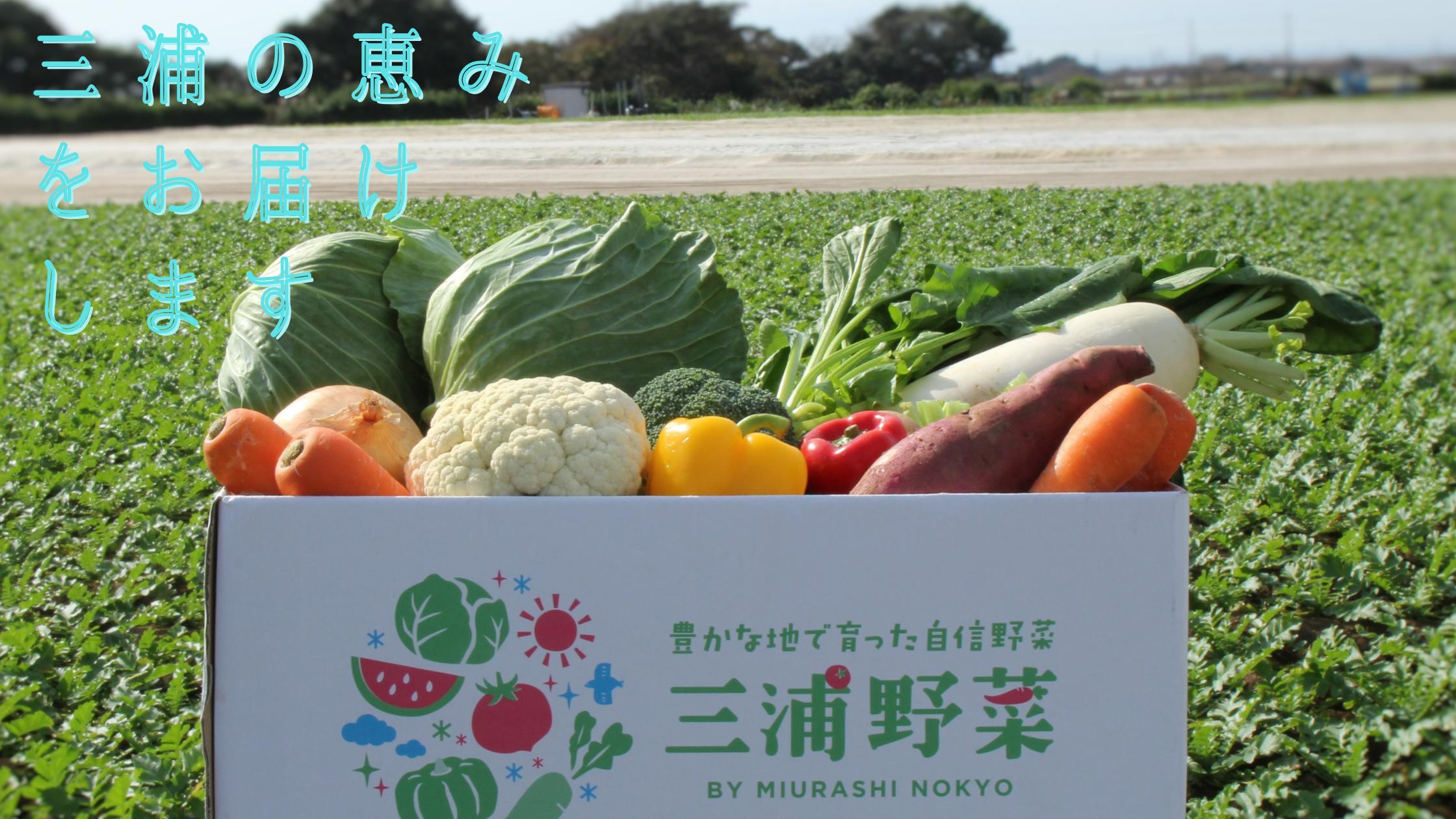 三浦野菜詰め合せセット