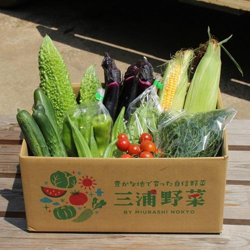 三浦の夏野菜 詰合せセット(中)
