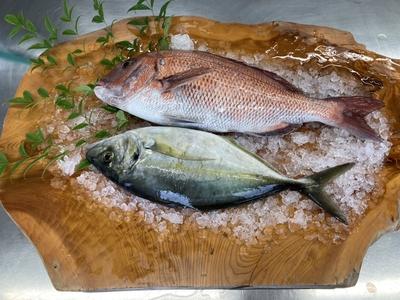 養殖ゆうこうシマアジと真鯛のセット