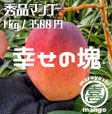 【秀品】幸せの塊 マンゴー(アーウィン種) 1kg~ 2~3個