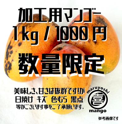 ※数量限定【加工用】幸せの塊 マンゴー(アーウィン種) 1kg~ 2~3個