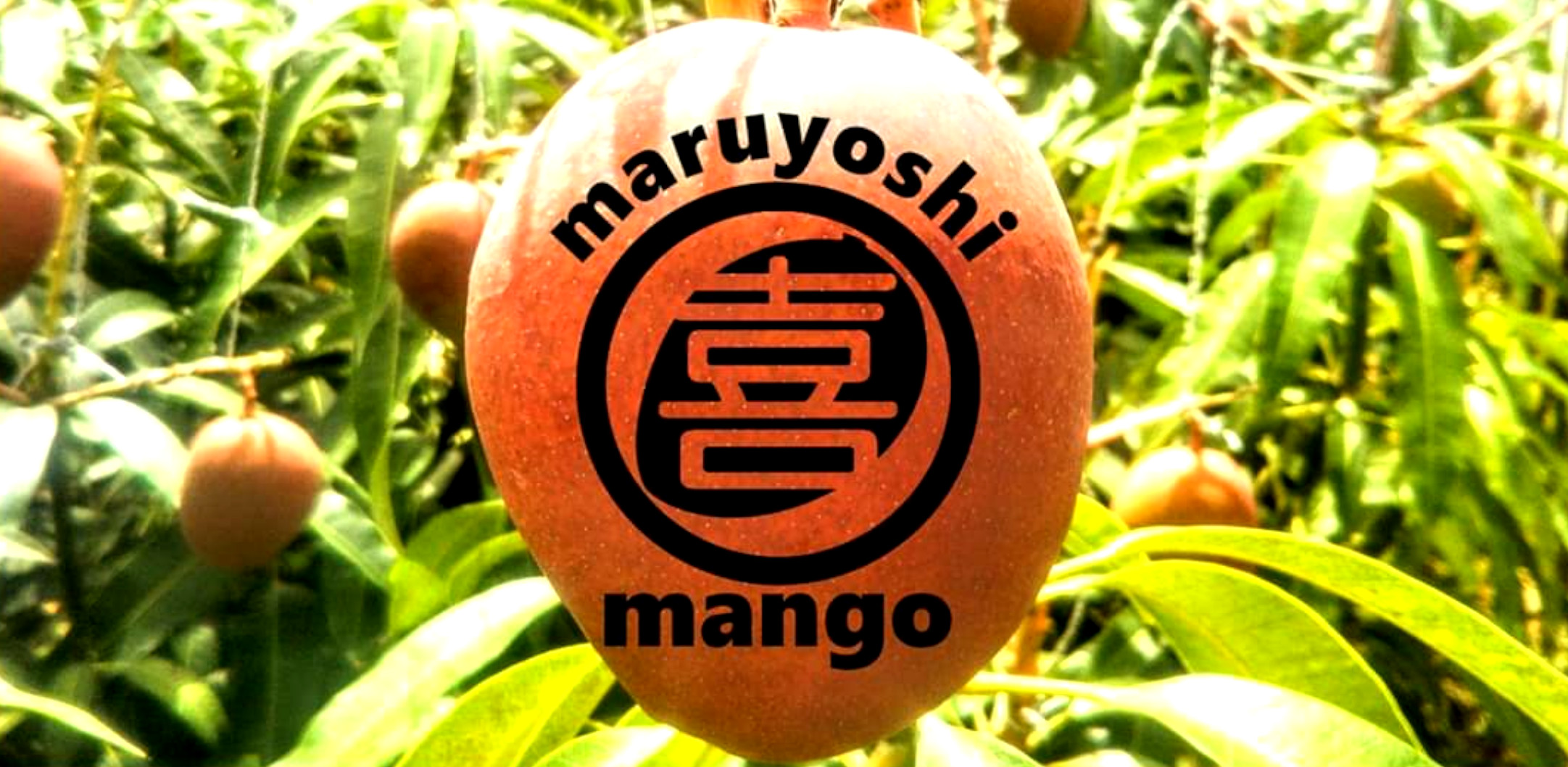まるよしマンゴー農園 沖縄 「幸せの塊」