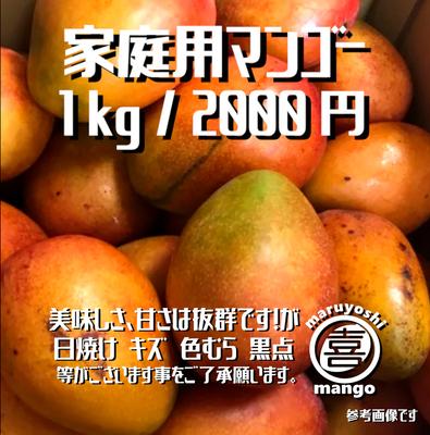 【家庭用】幸せの塊 マンゴー(アーウィン種) 1kg~ 2~3個