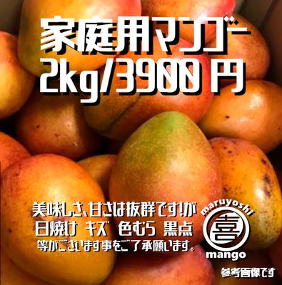 【家庭用】幸せの塊 マンゴー(アーウィン種) 2kg~ 4~6個