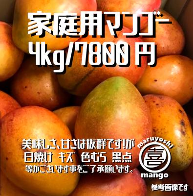 【家庭用】幸せの塊 マンゴー(アーウィン種) 4kg~ 8~12個