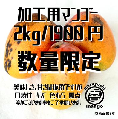※数量限定【加工用】幸せの塊 マンゴー(アーウィン種) 2kg~ 4~6個