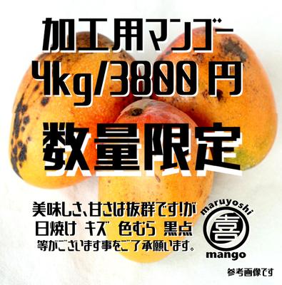 ※数量限定【加工用】幸せの塊 マンゴー(アーウィン種) 4kg~ 8~12個