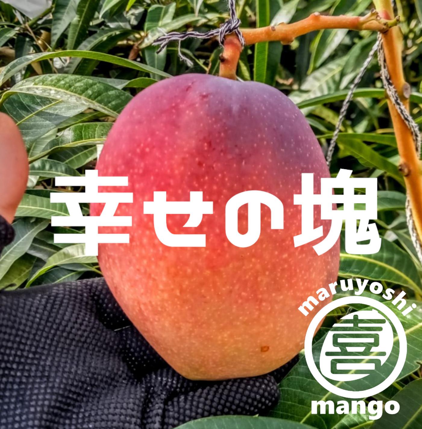 まるよしマンゴー農園
