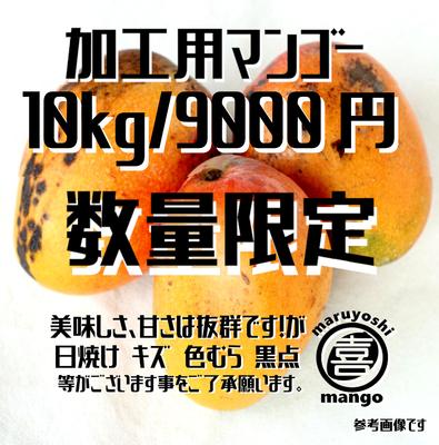 ※数量限定【加工用】幸せの塊 マンゴー(アーウィン種) 10kg~ 20~30個