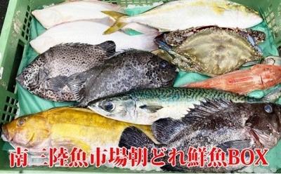 南三陸魚市場 当日水揚げ丸魚 6,480円コース