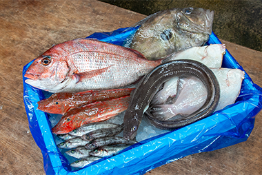 かねまた水産おまかせ鮮魚セット