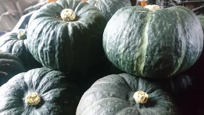 坊ちゃんかぼちゃ 6個