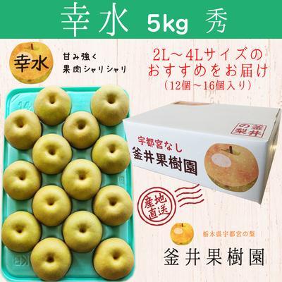 幸水梨【5kg】秀