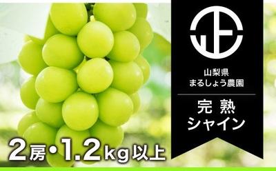 シャインマスカット 9月上旬~発送