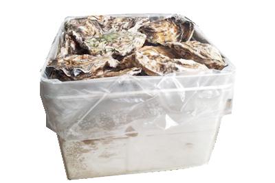 冷凍殻つき牡蠣 特大サイズ 半缶入り
