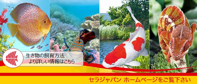 セラジャパン公式ホームページ