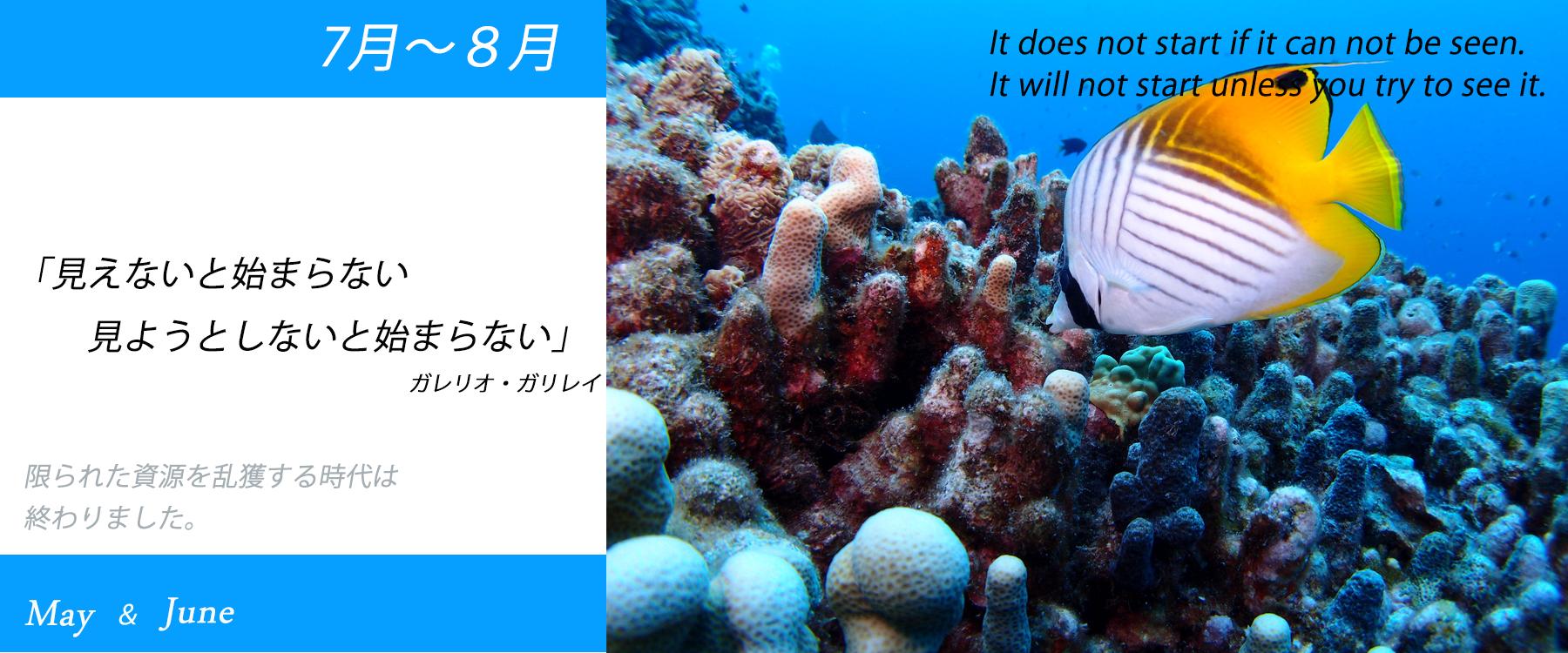 海水魚製品のセール