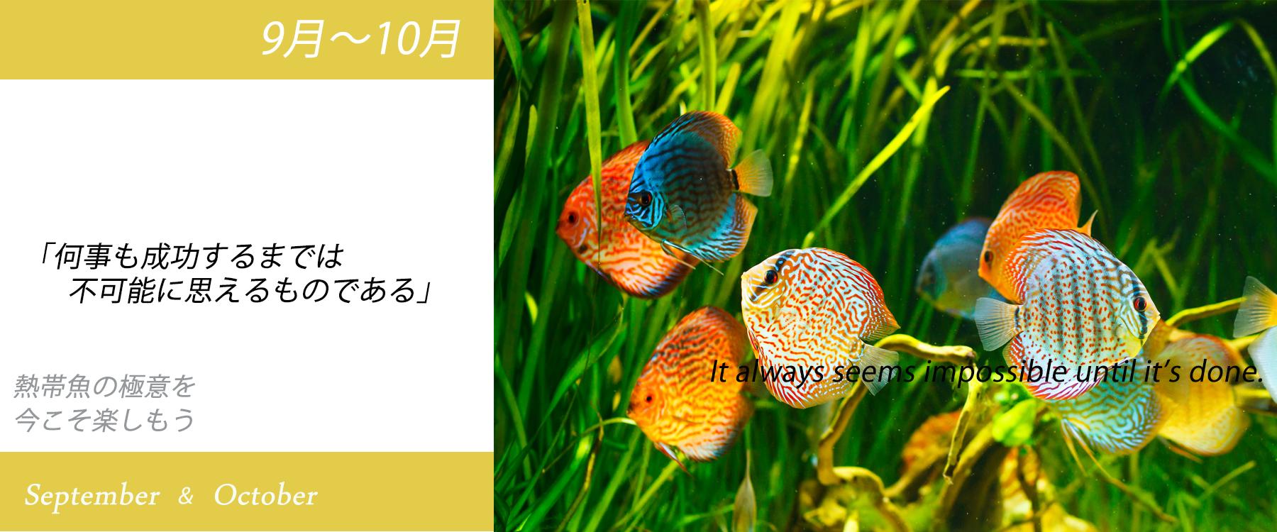 熱帯魚製品のセール
