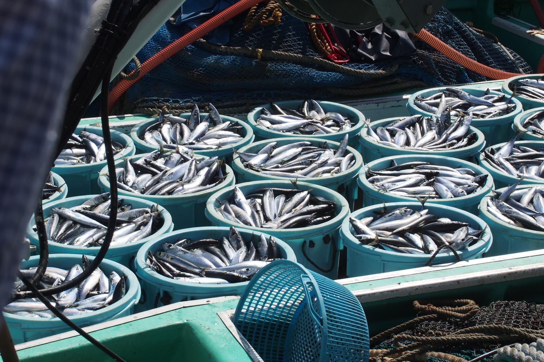 サバの水揚げイメージ