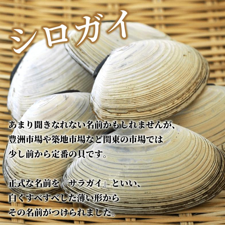 あまり聞きなれない名前かもしれませんが、豊洲市場や築地市場など関東の市場では少し前から定番の貝です。正式な名前を『サラガイ』といい、白くすべすべした薄い形からその名前がつけられました。