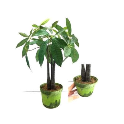 【送料無料】光触媒加工グリーンパキラツリー鉢