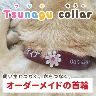 【Tsunagu collar(つなぐカラー)】飼い主とつなぐ。命をつなぐ。