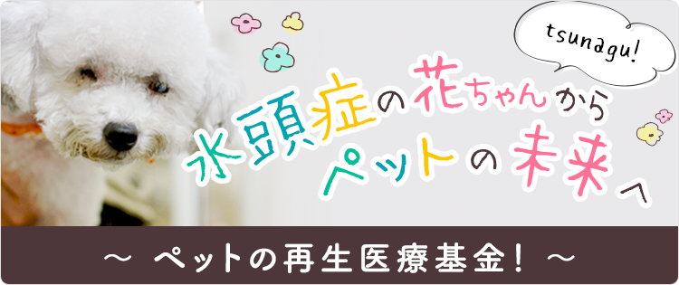 水頭症の花ちゃんからペットの未来へ tsunagu! ~ペットの再生医療基金!~