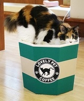 猫カップ(カフェ)