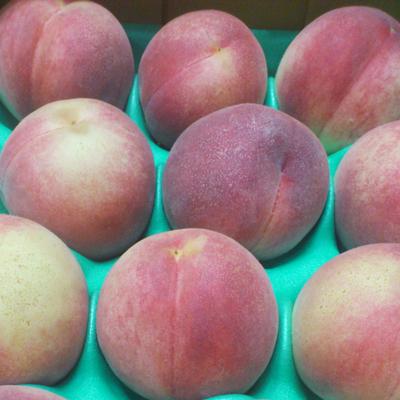 桃の箱詰め 約3kg ※注意事項を必ず読んでください。