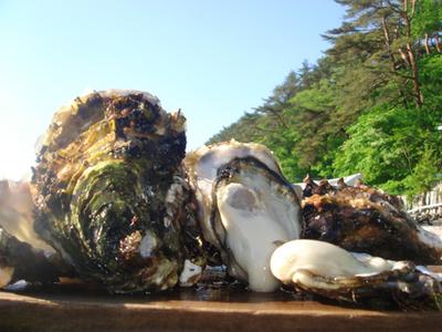 生食用殻付き牡蠣 Mサイズ10個