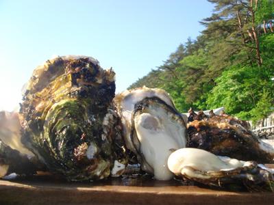 「水山牡蠣」20個【殻付、生食可】<送料込み>