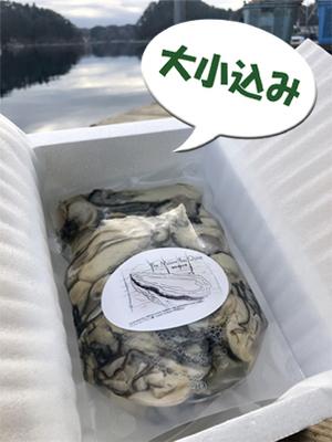生食用牡蠣むき身 大小込 (1.5kg、無加水)