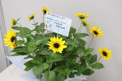 【夏のお中元ギフト】ひまわり『サンビリーバブル』5号鉢