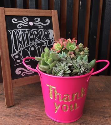 【多肉植物】寄せ植えグリッターブリキ ピンク